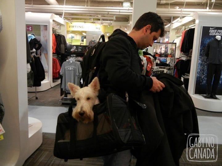 Ele adora fazer compras...