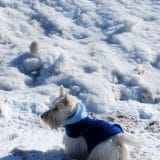 Joe curtindo muito a praia no inverno!