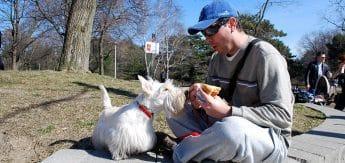 Joe e Ju comendo um cachorro quente!