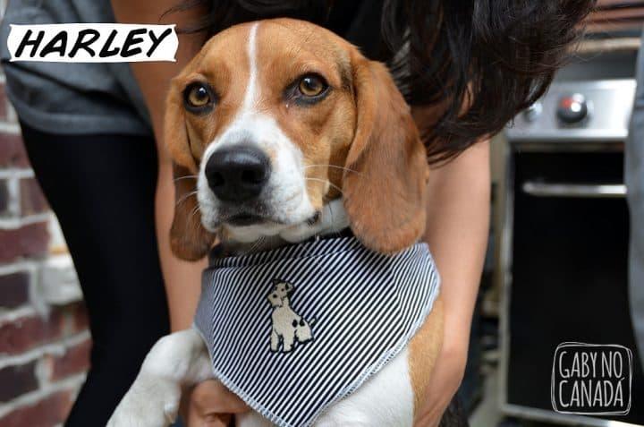 Harley_gabynocanada