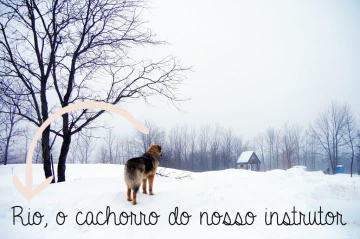 Rio_thedog_snowmobile