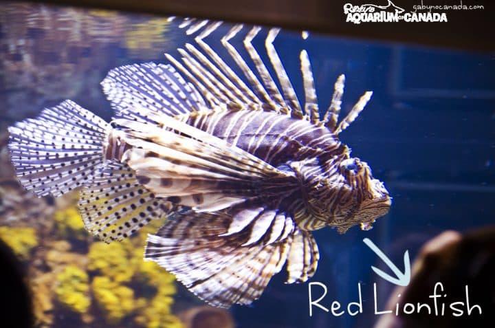 Redlionfish_GNC