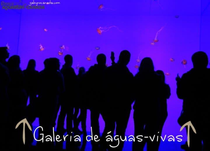 Ripleys_Aguaviva_GNC1