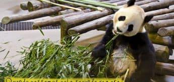 TorontoZoo_GNC_bamboo