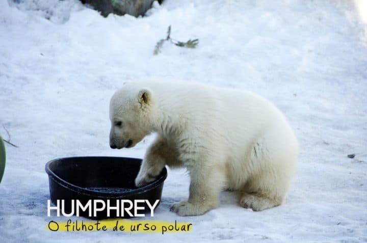 TorontoZoo_GNC_Polarbearbaby