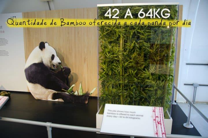 Zoo_GNC_bamboo