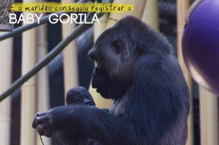 Zoo_GNC_Gorila